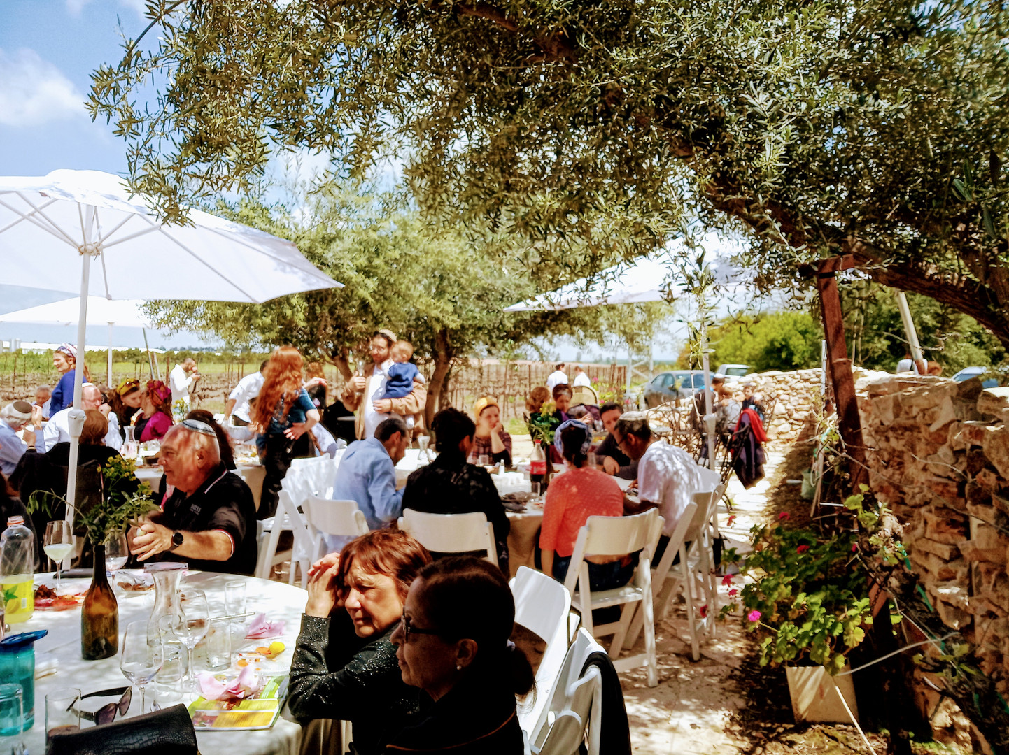 Conferences at Maresha Winery