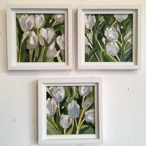 White Tulips 1, White Tulips 2, White Tulips 3 by Terry Sibson