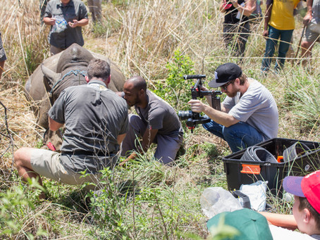 Filming Rhinos and Elephants in Northern Kwazulu Natal