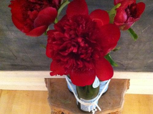 Scarlet Bloom