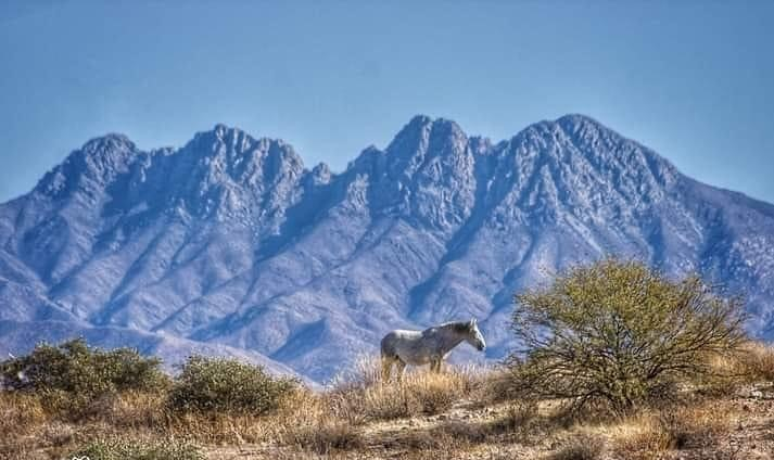 Four Peaks with wild horse
