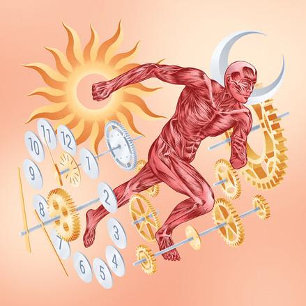 Metabolic Clock