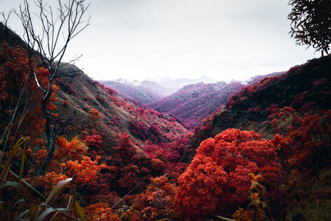 Infrared_dani_kangu_infrarot_06.jpg