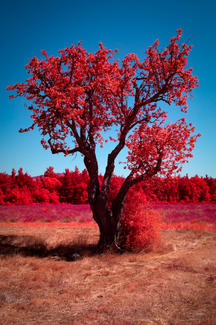 Infrared_dani_kangu_infrarot_02.jpg