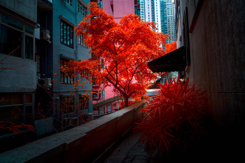 Infrared_dani_kangu_infrarot_04.jpg