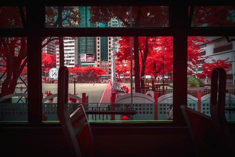 Infrared_dani_kangu_infrarot_03.jpg