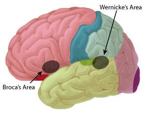 Broca's Area and Wernicke's Area