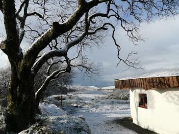 A Snowy Winter Wonderland