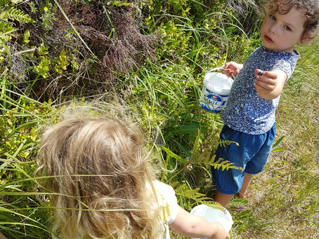 Wild billbery-picking