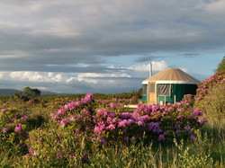 The Bog Yurt