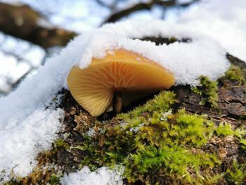 Frozen Funghi