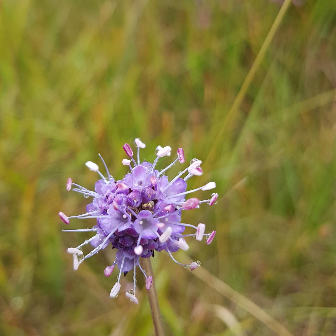 Wildflower Nature