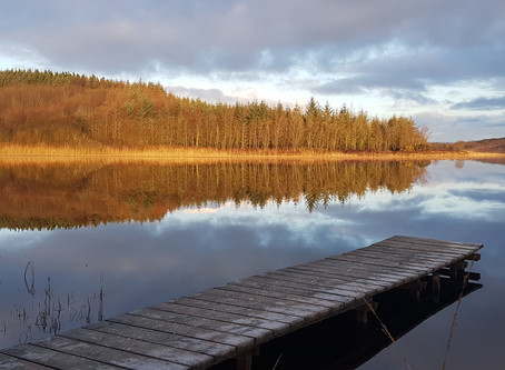 Lake Reflections