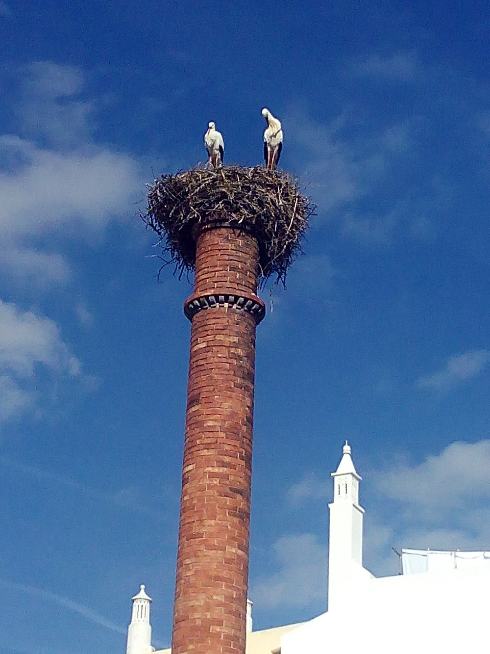 Portimão stork, cicogne a Portimaão