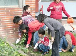 室外栽種植物,培養大智班學生對自然環境的愛護