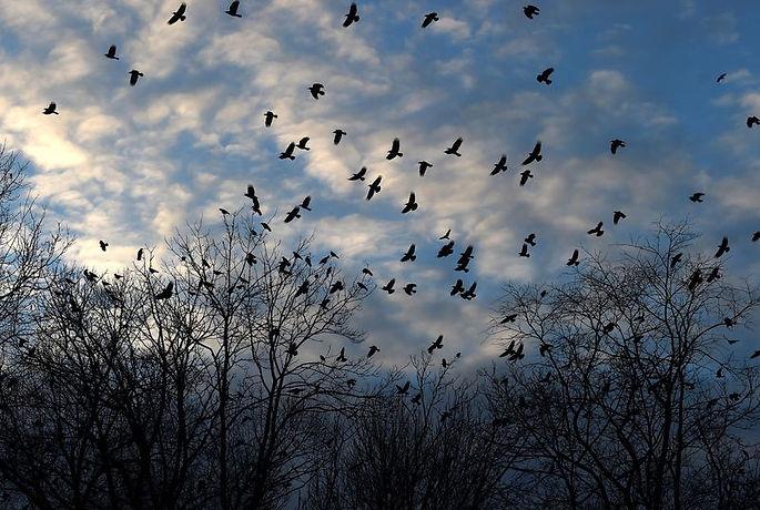 hartford crows courant.jpg