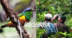 aves_edited