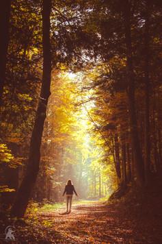 Se ressourcer en forêt