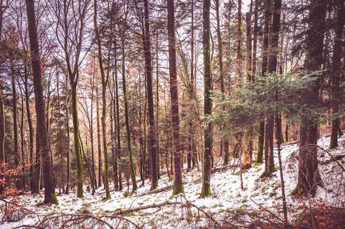 Forêt neuchâteloise
