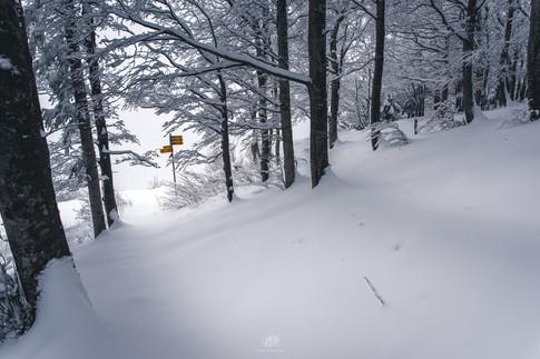 Mont-Aubert
