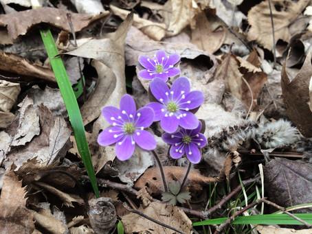 Spring Update