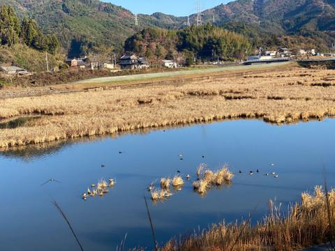 【キッチンカースタジアム連動企画】湿地帯散策で渡り鳥を観察しよう!