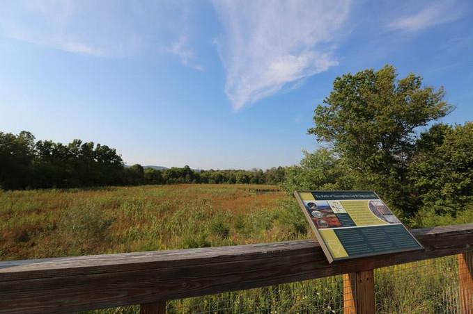Overlooking the wetlands
