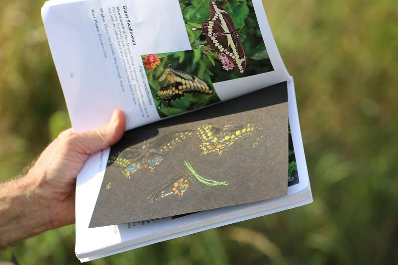 Lyt Wood shared a few of his gorgeous butterfly sketches - a great way to learn the colors and patterns for easier identification.