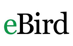 ebird_logo_400x250.jpg