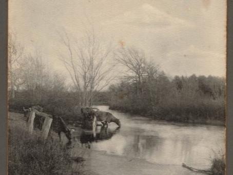 Mattapoisett River Herring Weir