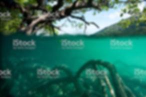 mangrove01.jpg