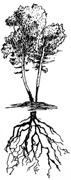 Tree Tree Tree