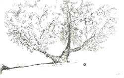 Paros Beach Tree