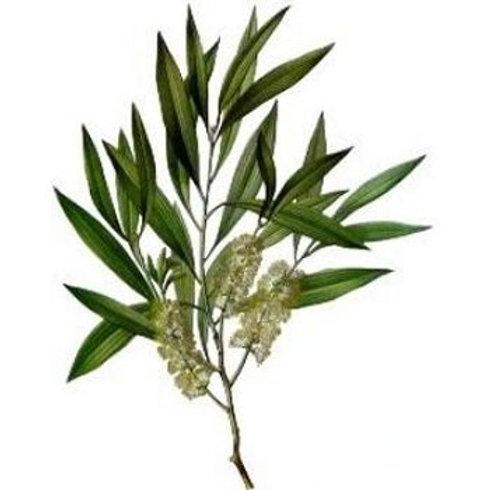 Tea Tree (Aus) Essential Oil