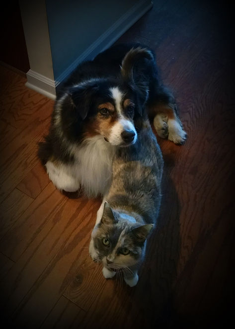 DohGrayMe Animal Massage - Dog, Cat, Canine, Feline Comfort