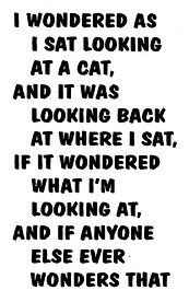 CAT #1.jpg
