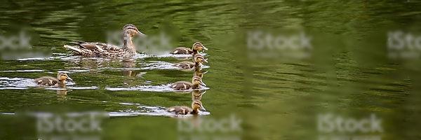 ducks in a row2_edited.jpg