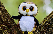 owl 1cute.jpg