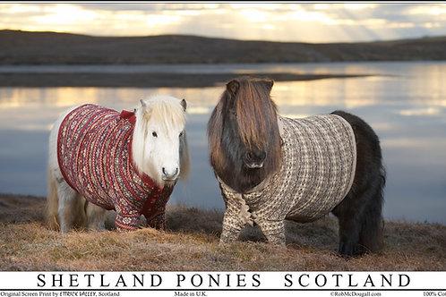 Shetland Ponies Tea towel