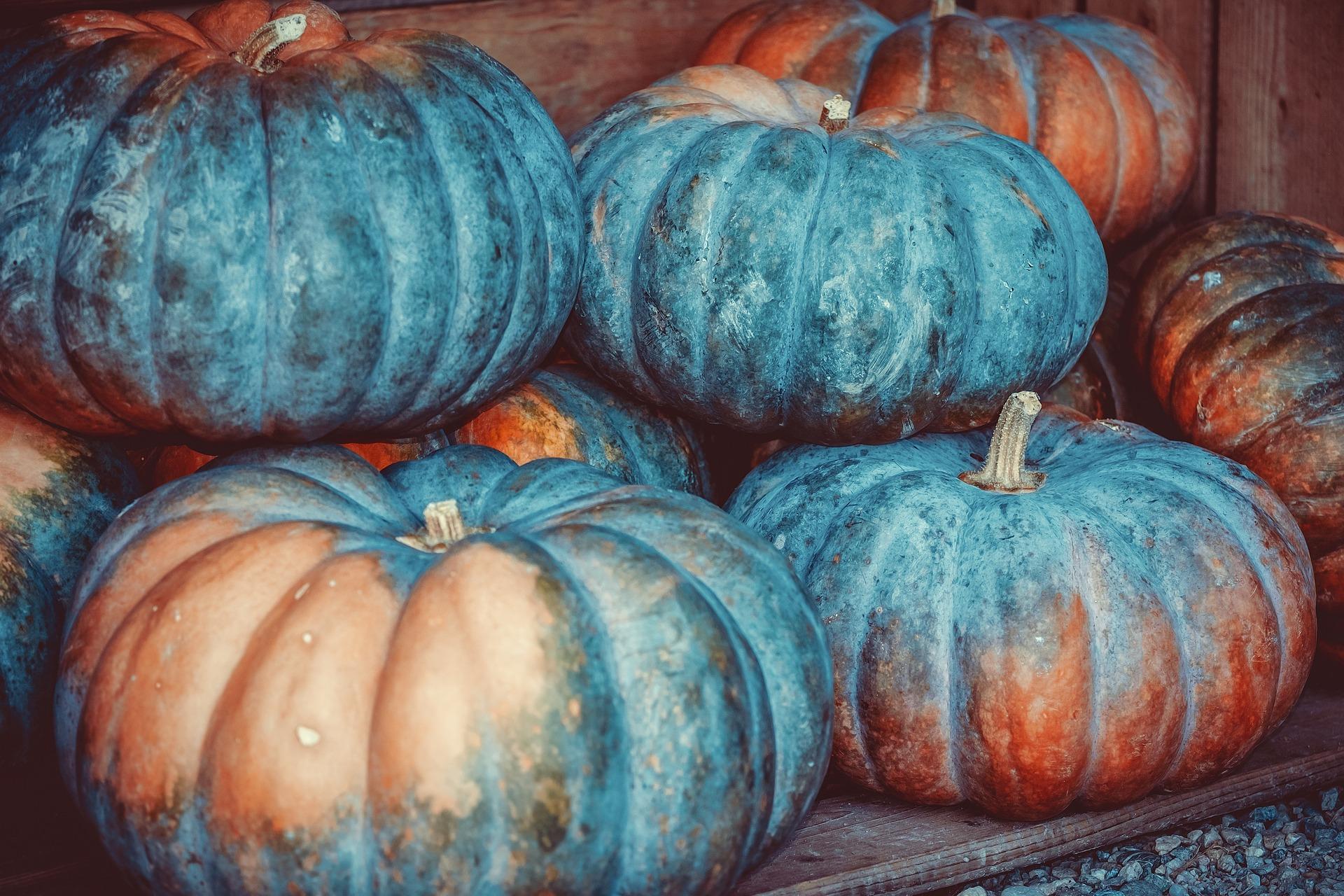 pumpkin-3680425_1920