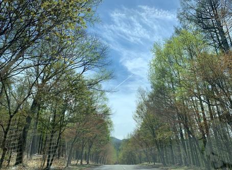 緑の風と近況報告