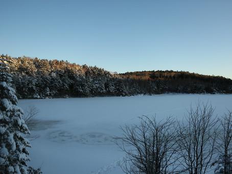 真冬の白駒池です。