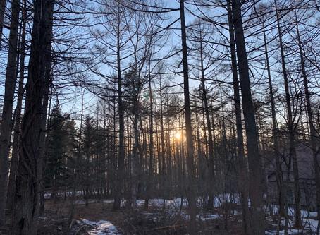 夕陽と目があいました