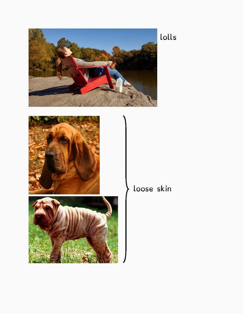 dog-page-002.jpg