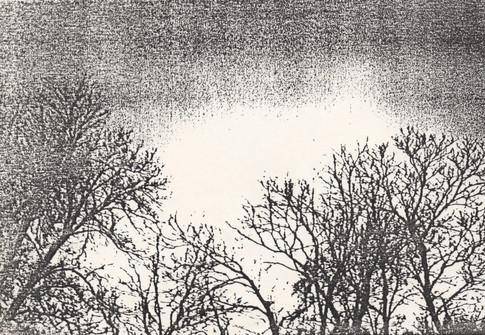 Blind Lemon Pie trees near rehersal space