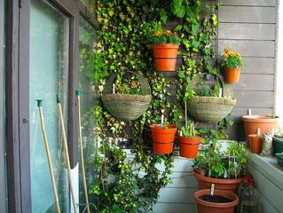 Устройство зимнего сада на балконе или лоджии