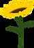 Sunflower.webp