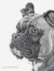Boxer Dog Portrait Pen and Ink
