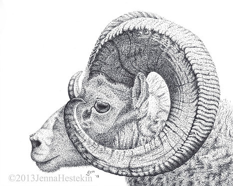 Dahl Sheep Fine Art Print or Notecards