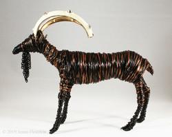 Ibex ~ Sold
